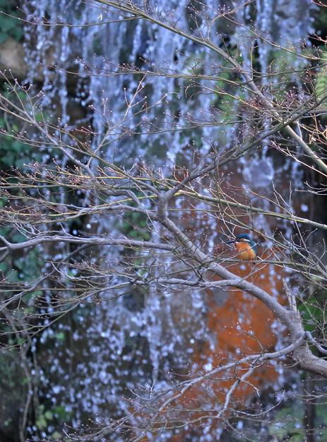 兼六園 翠滝と翡翠