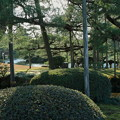 写真: お正月の兼六園 唐崎松の下