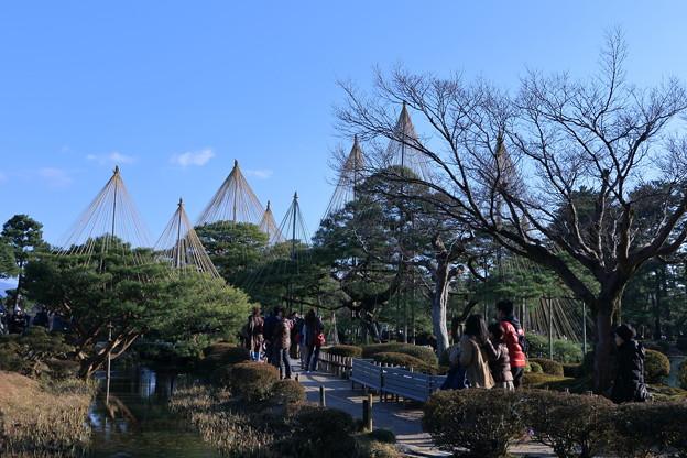 写真: お正月の兼六園 青空と唐崎松