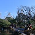 Photos: お正月の兼六園 青空と唐崎松