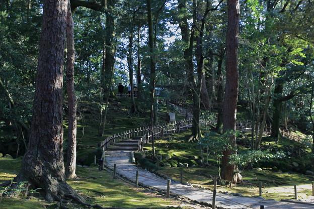 兼六園の雑木林?