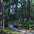 写真: 兼六園の雑木林?