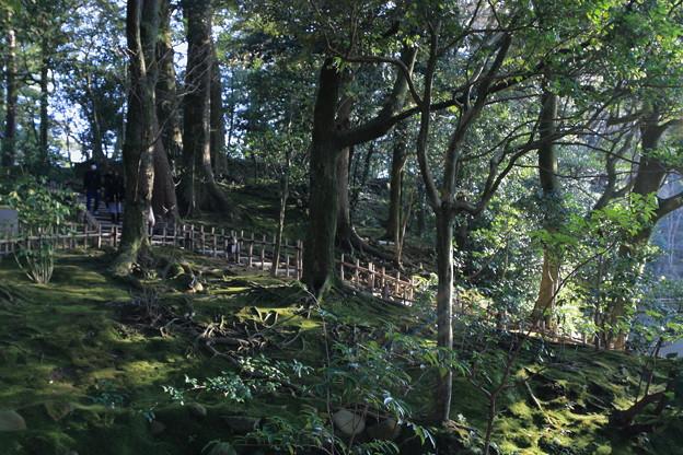 兼六園 苔の林?