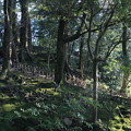 写真: 兼六園 苔の林?