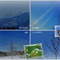 ユリノキと山並み 飛行機雲