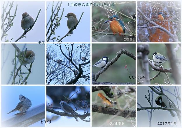 Photos: 1月の兼六園で見かけた鳥