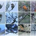 1月の兼六園で見かけた鳥
