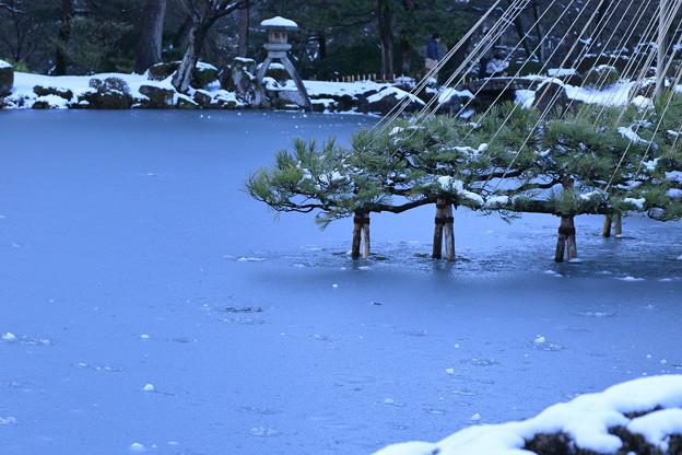 雪の兼六園 雪吊り