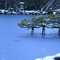 Photos: 雪の兼六園 雪吊り