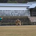 Photos: 鷹匠とミミズク(5)