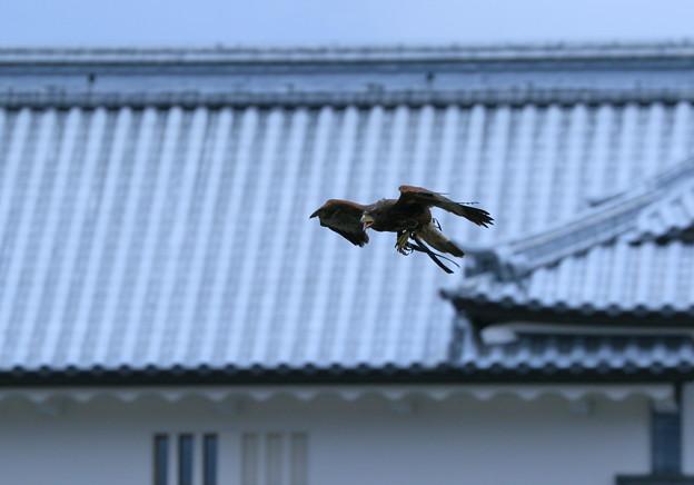 金沢城と鷹
