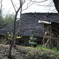 春の茅葺の家と薪