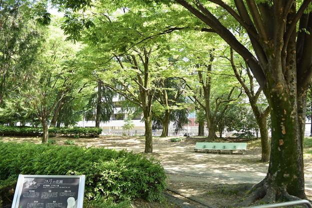 千種公園の景色 (1)