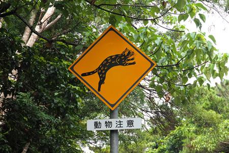 西表山猫標識 西表島