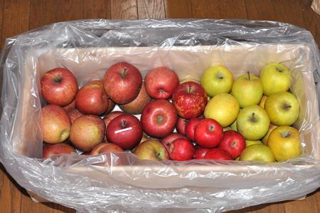 リンゴ三品種