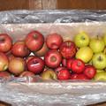 写真: リンゴ三品種