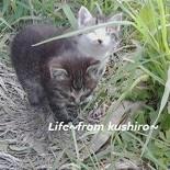 lifekushiro~犬猫のSOS~