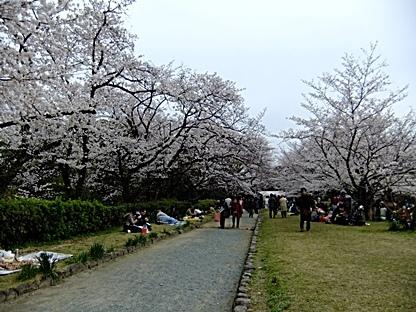 桜祭りの会場へ