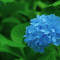 雨の香りの季節の花