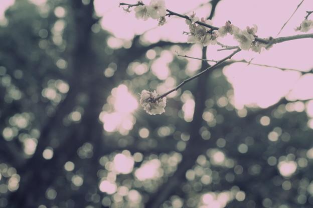 Photos: 春風の塵惑い