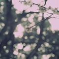春風の塵惑い