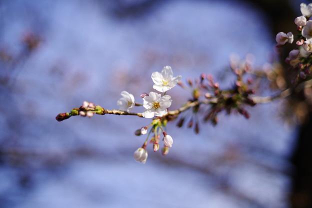春来たれり