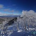 写真: 霧氷-2