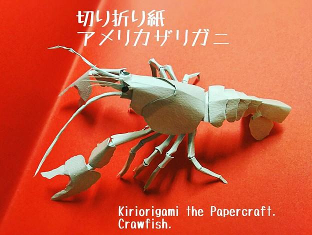 写真: アメリカザリガニ 切り折り紙