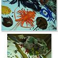 Photos: 葛西臨海水族園の展示1