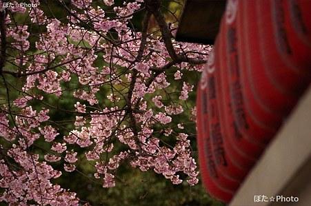 豊川稲荷の春