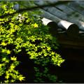 Photos: 新しい緑
