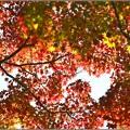 写真: 紅葉2016その1