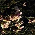 Photos: 春の夜に