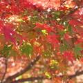 秋、いろいろ
