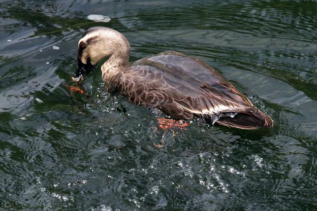 Photos: ?水中で捕まえたのは・・?意外なものでした。