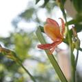 写真: 咲いたよ