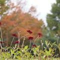 Photos: チョコレート色の秋