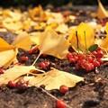Photos: 秋のご馳走