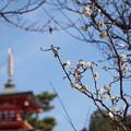 写真: 東風ふかば