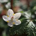 写真: 咲きたてほやほや