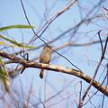 写真: 鳥撮り奮戦記(2)