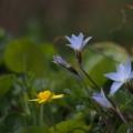 写真: それぞれに春