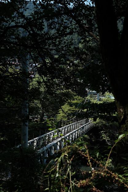 つり橋-6210