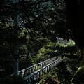 Photos: つり橋-6210
