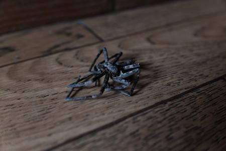 クモ-1474