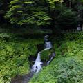 Photos: 箱島湧水-1533