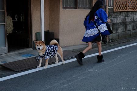 川越祭り_わんこ-0352