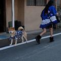 Photos: 川越祭り_わんこ-0352