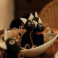 ハロウィン_07黒猫-0564