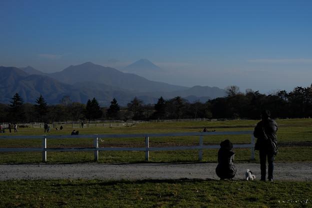 富士を眺める-1553